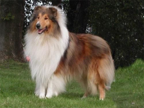 One day I will have a collie and name her Melon :) lol