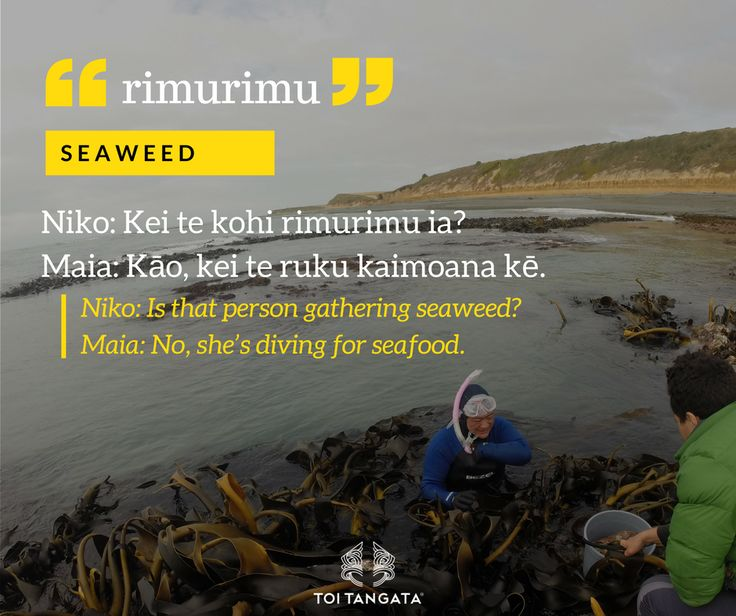 Karengo, parengo, rimurapa, rimu, rimurimu. All words for seaweed but there can be only one kupu of the week. Kupu of te wiki: rimurimu. Seaweed. #toitangata #kupuotewiki #wordoftheweek #tereo #Māori #toitekupu #rimurimu #kaimoana #diving #seaweed #getinmyhangi #foodofthefuture #gettingdinner #gatheringfood #organic