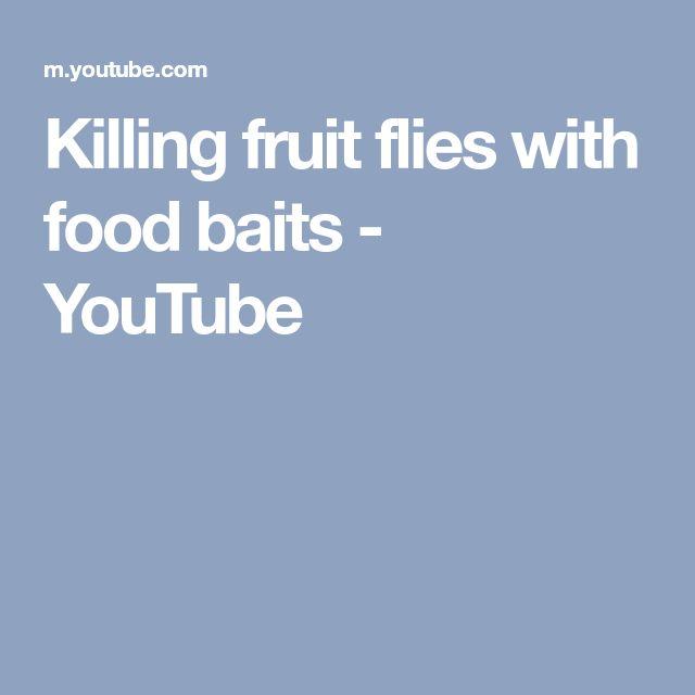 Killing fruit flies with food baits - YouTube
