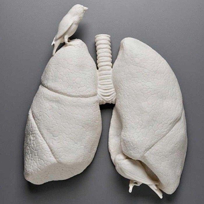 Очищение лёгких и продление жизни древнеиндийским способом