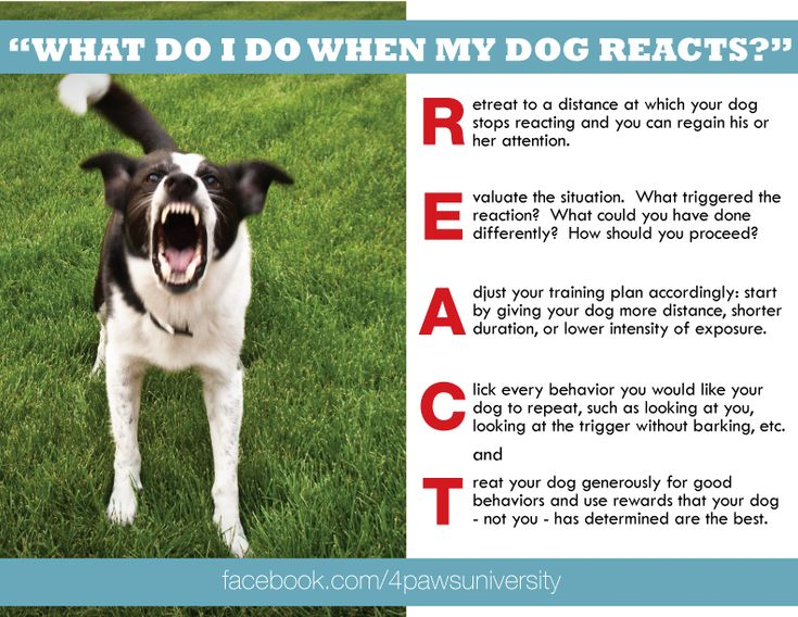 Image Result For Treat And Retreat Dog Training