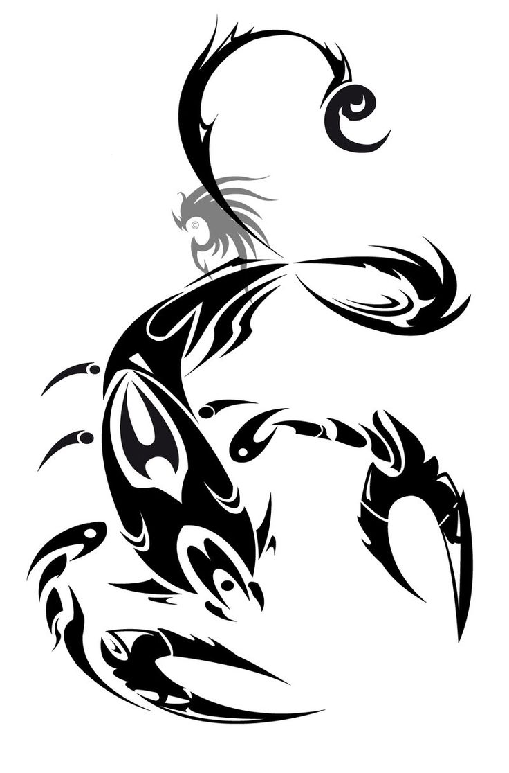 Scorpion king tattoo design - Tribal Zodiac Viii Scorpion Tattoo Design Tattoes Idea 2015 2016