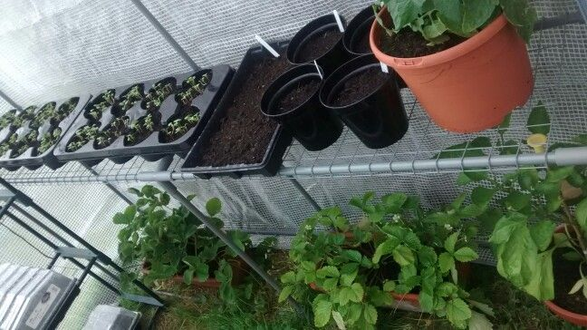 Getting a greenhouse