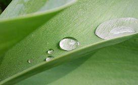 Best Indoor Plants to Remove Toxins: House Plants, 10 Plants, 10 Indoor, Tops 10, Removal Indoor, Indoor Toxin, Tops Ten, Ten Plants, Indoor Plants