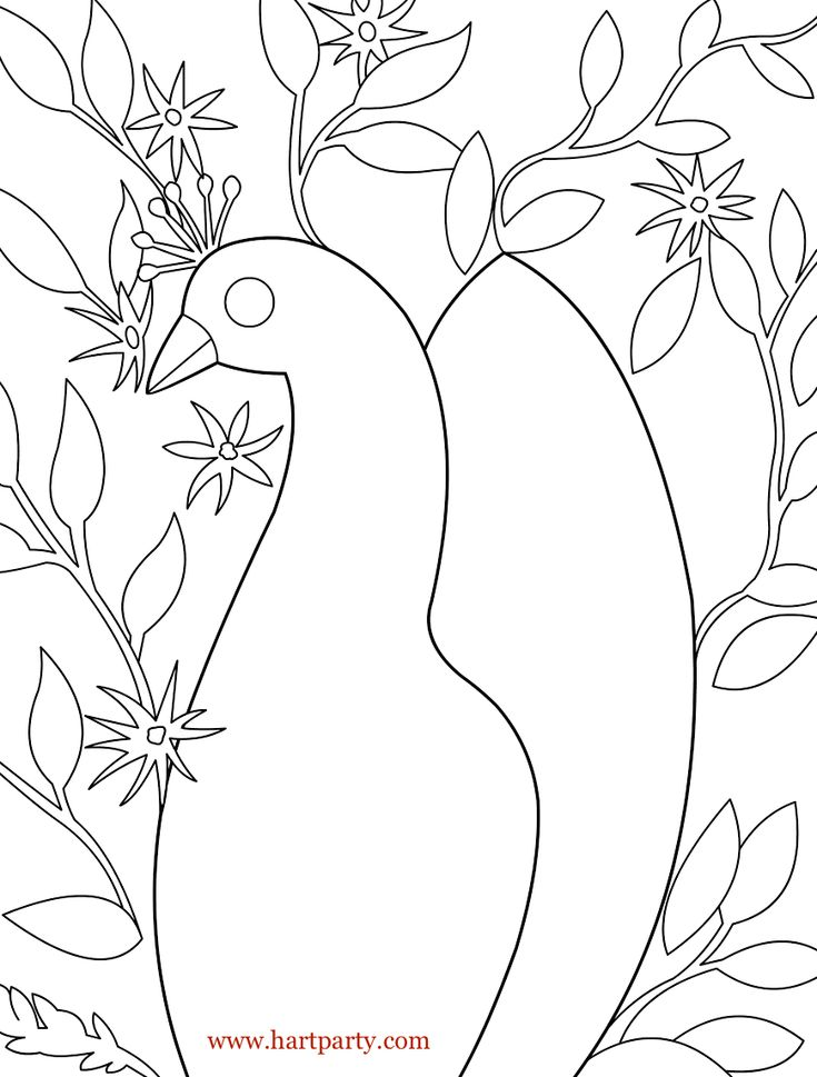 Traceable Floral Peacock And Coloring Page Hartparty As Seen On