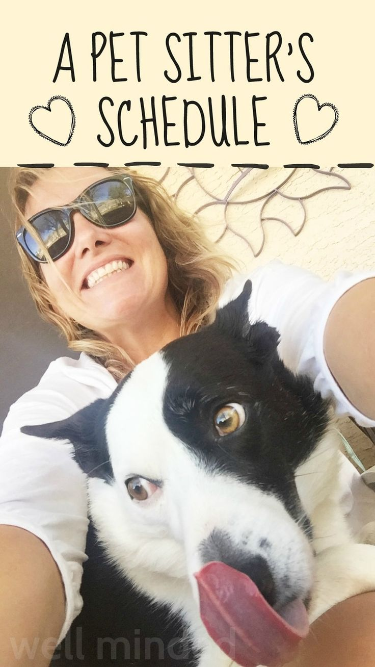 A Pet Sitter's Schedule|  I like her blog and simple, easy to read services page