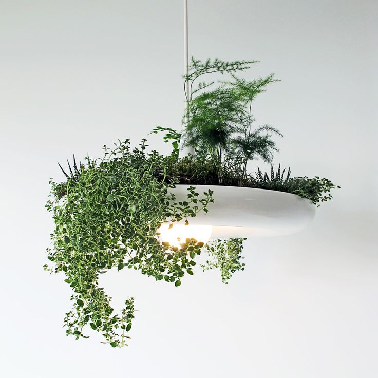 """Babylon Plantable Light Fixture by Ryan Taylor.  Ryan Taylor's Babylon light fixture can be used as """"an organic centre piece or a working herb garden"""". Created in collaboration with Planting Design Advisor Victoria Taylor.      """"Made of aluminum with a powder coated finish, it can be used as an organic centre piece or a working herb garden over the kitchen counter."""""""