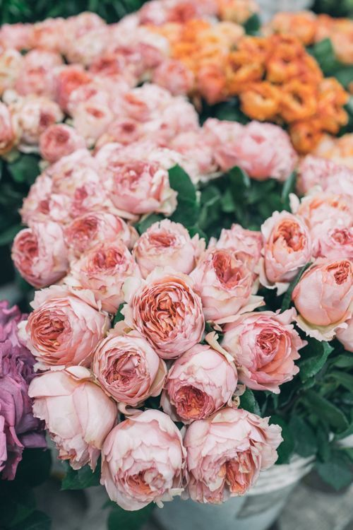 pretty pink and orange flowers