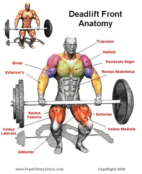Deadlift Tips Brute Force Strength: 56 Best Images About Bodybuilding Anatomy 2 On Pinterest