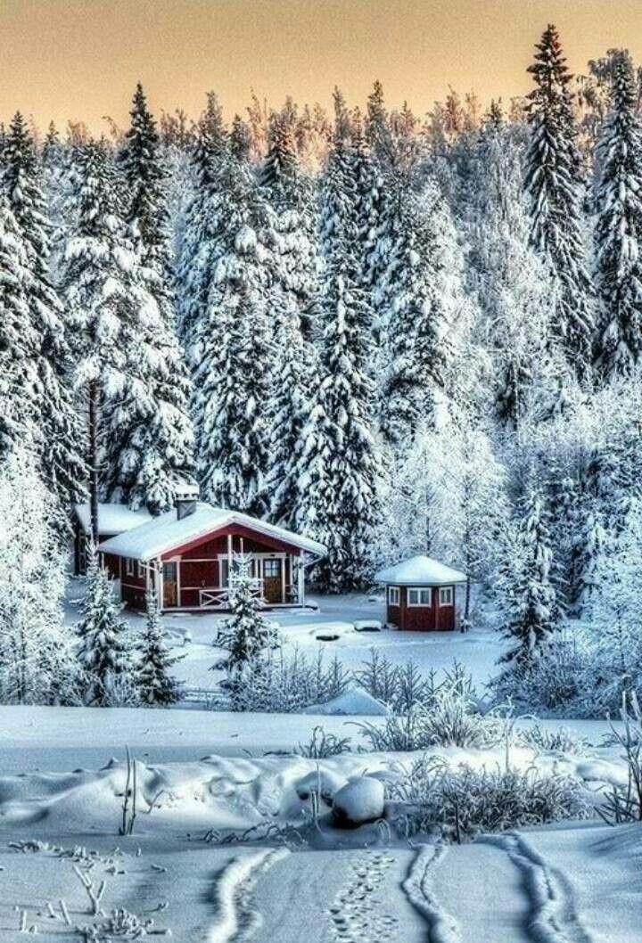 длилась полгода, зимний пейзаж картинки книжный формат вид деятельности производство