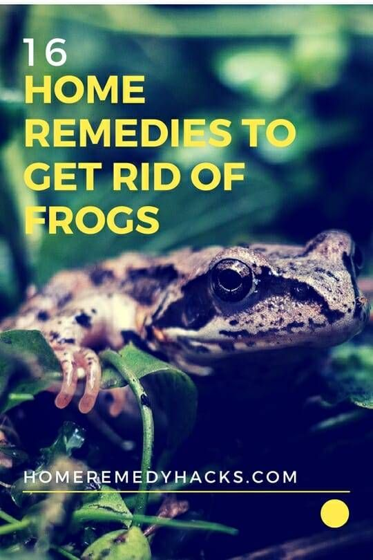 Pin on Frog Repellant