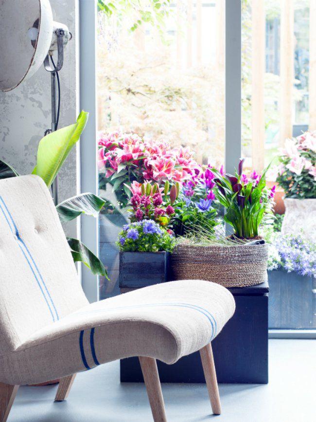 Der Garten als zweites Wohnzimmer – Pflanzenfreude.de