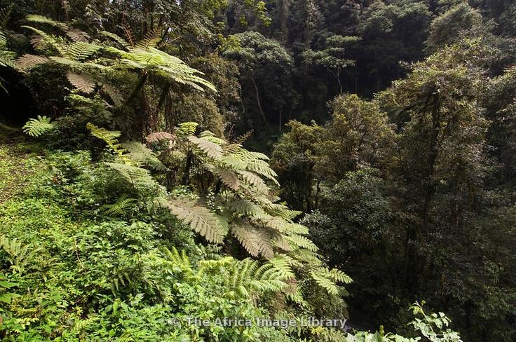 RW-NY-forest-0004_xlarge.jpg (800×531)