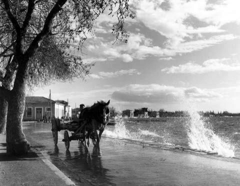 Αγριά Πηλίου το 1955... Φωτογράφος Τάκης Τλούπας.