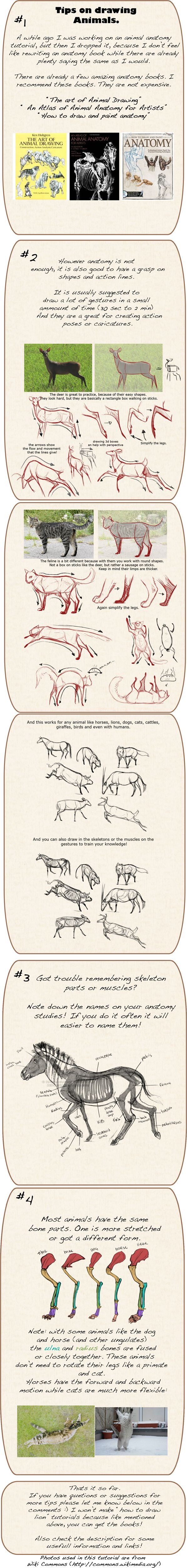 Tips on drawing animals Find more at https://www.facebook.com/CharacterDesignReferences & http://www.pinterest.com/characterdesigh