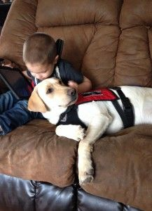 Bentley just graduated as an autism service dog and prevents his boy from wandering and bolting with his tethering/anchoring skills. He also does deep pressure therapy when his boy gets upset and he is also trained to scent track Robby if he wanders off.