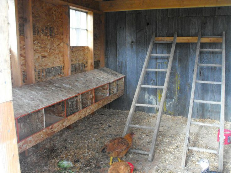 inside the coop recycled ladder