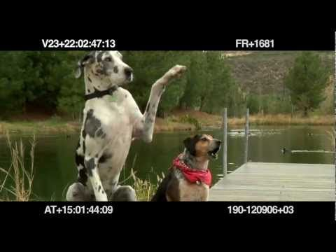 Subaru Funny Dog Test Bloopers Commercial 2012 - Carjam Radio Talk Show About Cars  2012