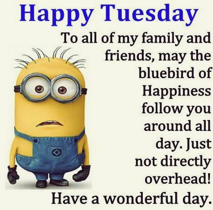 Funny Minion Quotes Tuesday: 17 Best Images About Days Of The Week On Pinterest