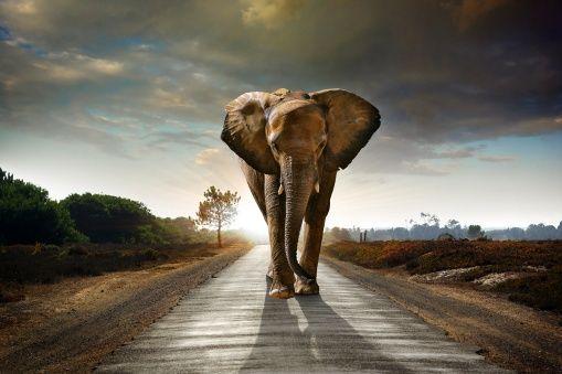 Elephant Road - Canvas-taulut (maalaus) - Photowall