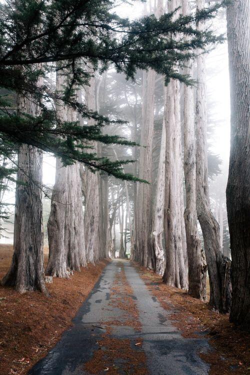 kristine-nicole:  Enchanted pathway Www.kristineherman.com