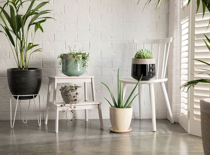 Create an eclectic look in your home with pots varying in colours, sizes and textures #bunnings