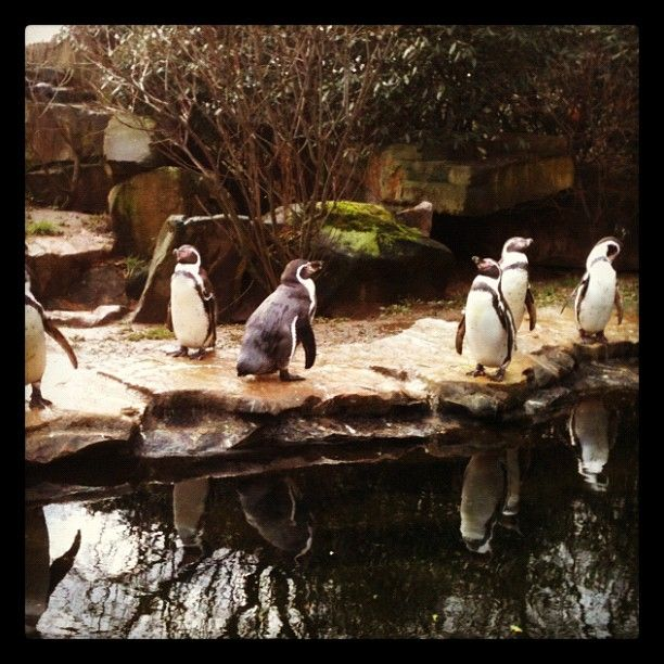 Loved them! Berlin. Zoo.