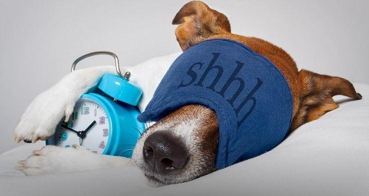 физиологические механизмы и гигиена сна