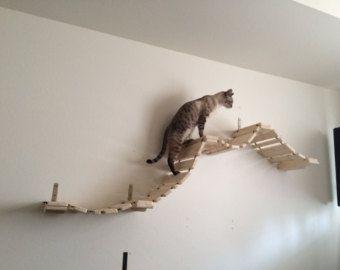 Cat bridge.. Indiana Jones Cat Bridge