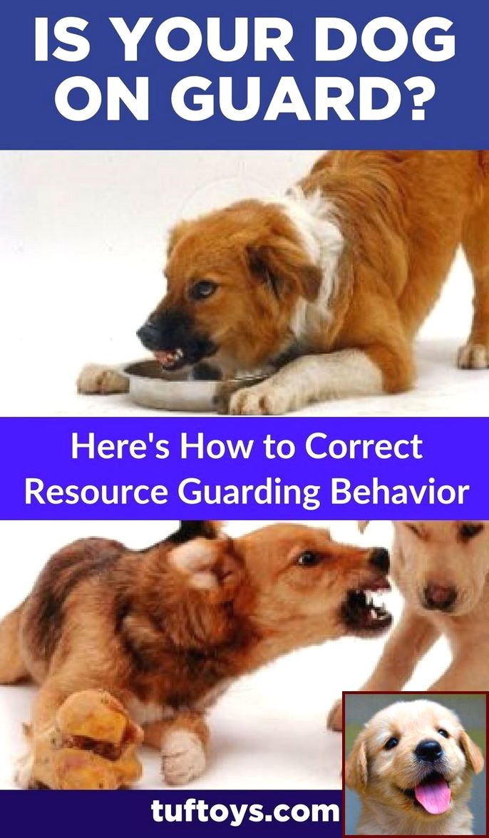 Potty Training A Puppy Overnight And Dog Behaviorist Near Me Dog Behavior Problems Training Your Dog Aggressive Dog
