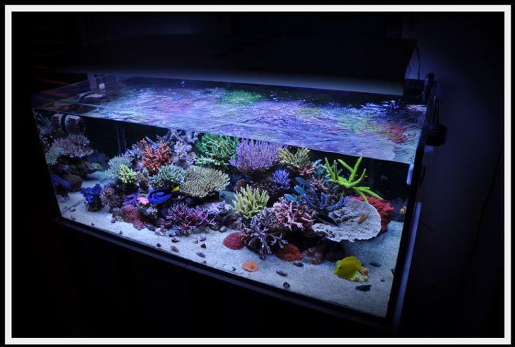 828 besten saltwater aquarium bilder auf pinterest. Black Bedroom Furniture Sets. Home Design Ideas
