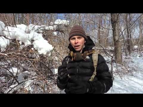 Winter Plant, Tree, & Mushroom Identification with Adam Haritan (Learn Your Land) - YouTube