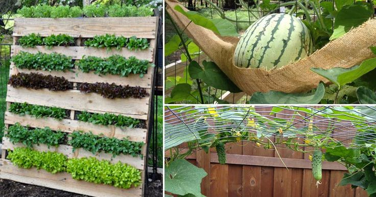 Vertical gardening is a great way to save space while also protecting your plants from some insects and diseases.