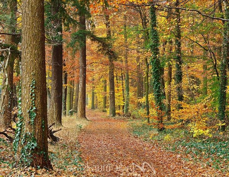 Pathway Through The Autumn Forest. Part 57