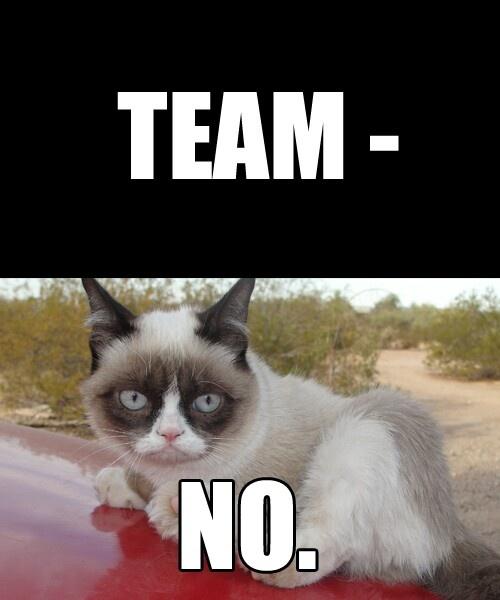 team no grumpy cat pinterest