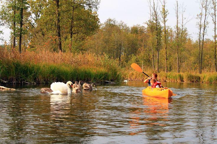 W mazurskiej wiosce Krutyń, położonej w sercu Puszczy Piskiej, można przeżyć jedyne w swoim rodzaju spływy łodziami po rzece Krutyni, których początek datuje się na okres międzywojenny.  fot. Mrągowskie Centrum Informacji Turystycznej