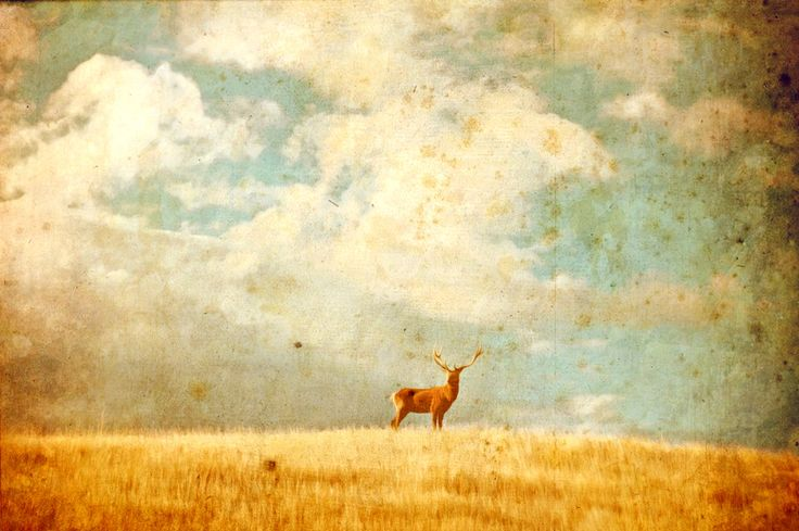 VINTAGE STAG - landscape photography, grassland, wilderness, deer, whimsy, vintage, rustic, art photography, skehan, vintage photo print by LittleOwlArtHouse on Etsy