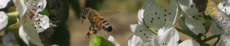 Monterey Bay Beekeepers (ABC) website