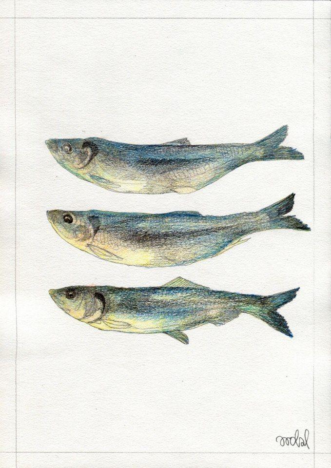 """Herrings"" for KUCHNIA magazine, by AROBAL, 2014"