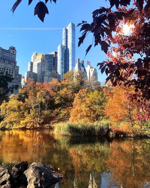 Central Park this morning by Scott Lipps @scottlipps | New York City Feelings | Bloglovin'
