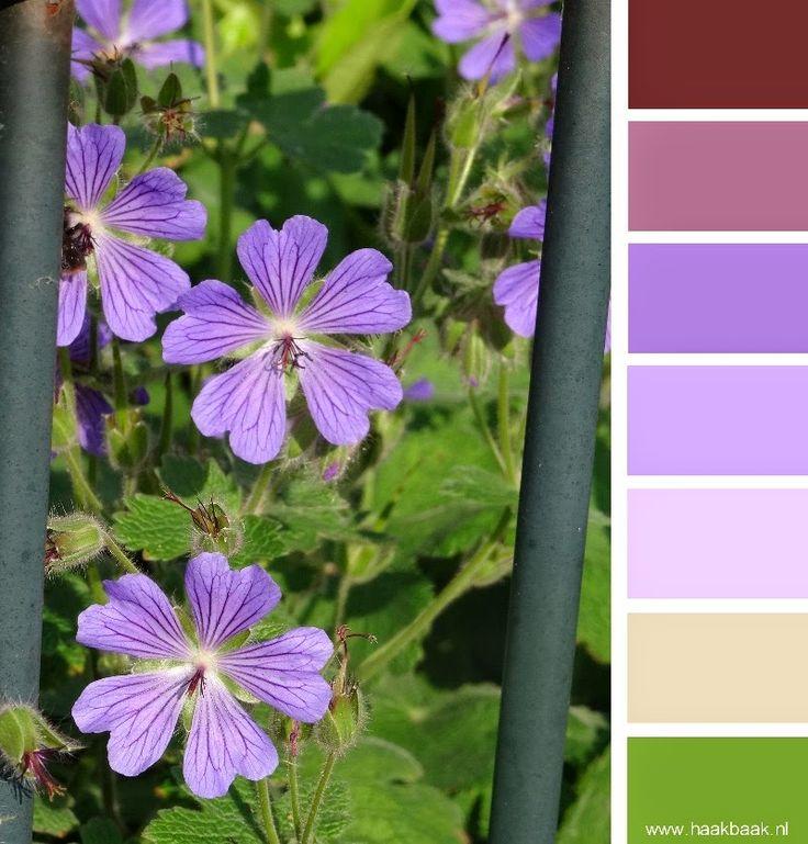 de Haakbaak: Kleur je weekend - bloemtinten paarse geranium