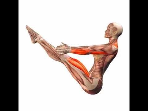 Hoy haremos un trabajo con nuestra imaginación. ¡Comencemos! Imaginemos que por cada ejercicio que hagamos se enciende el músculo con una luz interna como un botón, al encenderse observamos cual músculo está trabajando. ¿Difícil verdad?   Por ello se lo pondremos más fácil con un video: Dentro de esta muestra encontraréis ejercicios de Pilates y de yoga, pero lo que realmente nos interesa es mostraros que parte de nuestro sistema muscular trabaja y cuantos grupos musculares.