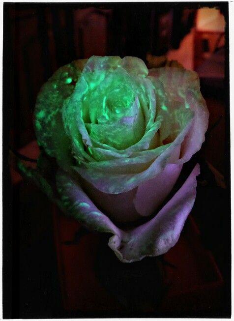 My little Rose :)