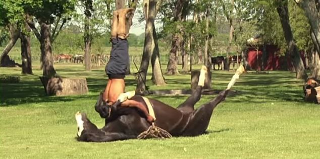 The exercise of horse yoga is practiced at the Doma India School in San Luis, Argentina...