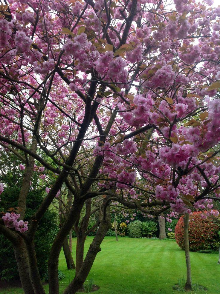 Blossom, Cobham, Surrey