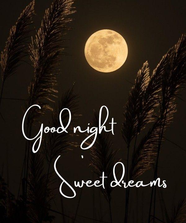 Good Night Sweet Dreams Images Pics Beautiful Good Night Images Good Night Beautiful Good Night Image