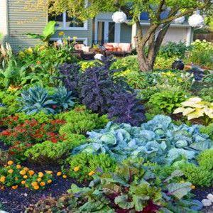 Como planear um jardim comestível