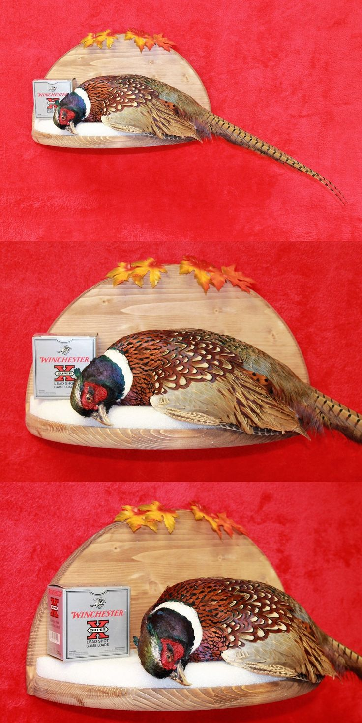 Birds 71123: Taxidermy Pheasant Mount A Successful Harvest -> BUY IT NOW ONLY: $149 on eBay!
