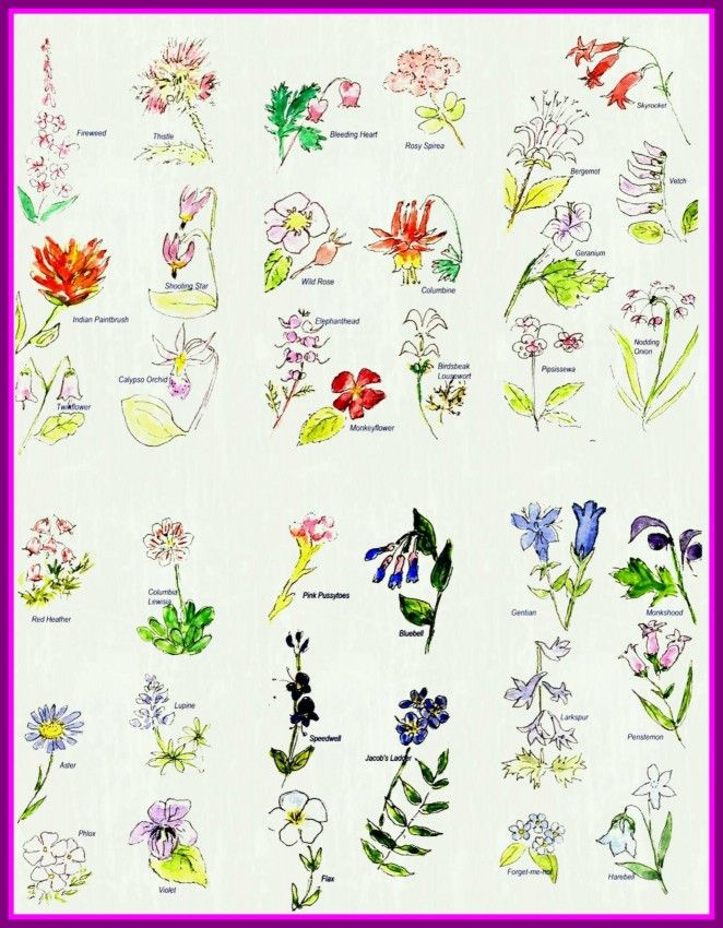 Flower Drawing Flower Drawing Names Incredible With Names