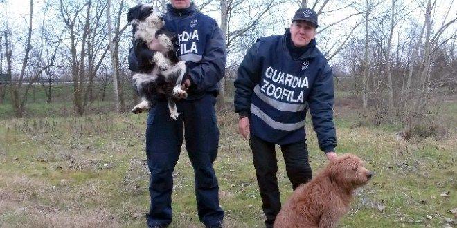 Pavia: cucciolo di sei mesi chiama i soccorsi per il suo papà incastrato nel filo spinato